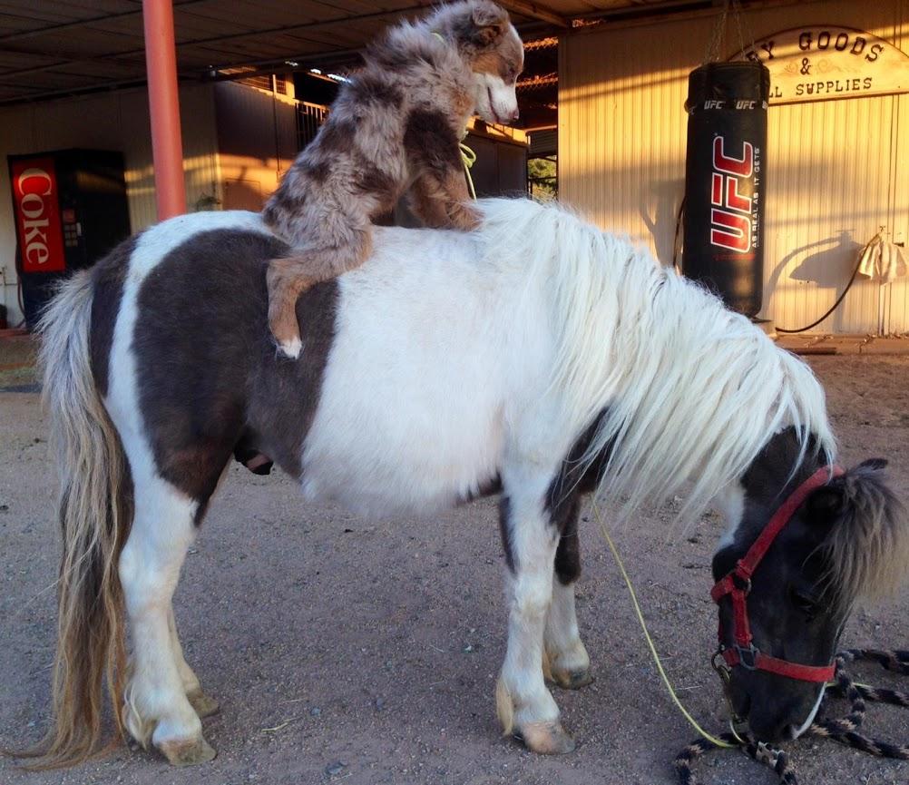 Dog Tricks and Pony Show - DogFunner.com