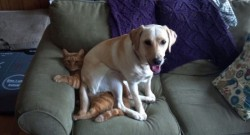 dog vs cat couch wrestling